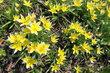 Prosecký park - plný zeleně a květů