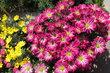 Před květinářstvím