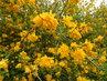 Plné květy zákuly (24.4.)