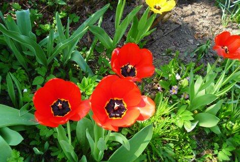 FOTKA - duben na zahradě