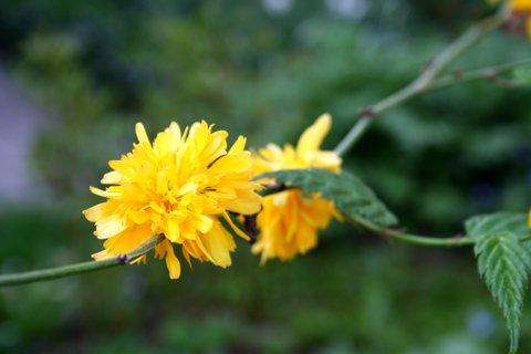FOTKA - Fotka kvetu