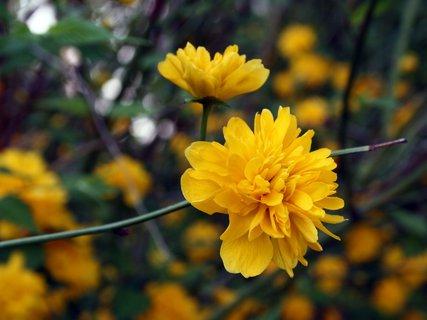 FOTKA - Fotka žltého kvetu
