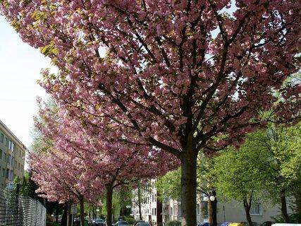 FOTKA - Jarní město