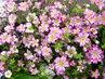 jarní drobné květy z procházky