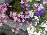 květináč ve městě..před týdnem foceno