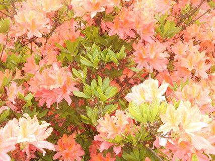 FOTKA - Krásně kvete