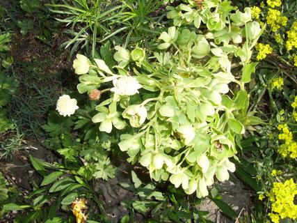 FOTKA - Má plno květů