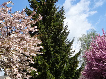 FOTKA - čtyři různé stromy