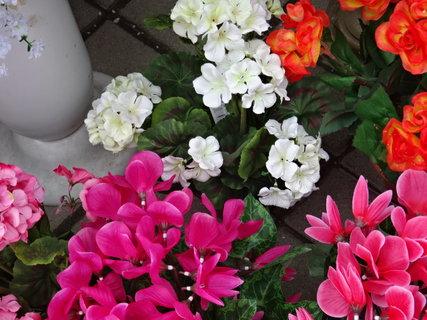 FOTKA - různé druhy květin,
