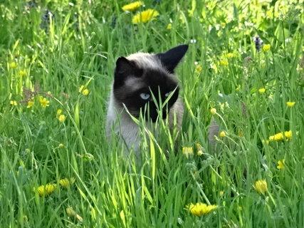 FOTKA - jaro,v trávě