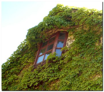 FOTKA - Zelený dom