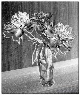 FOTKA - Kresba kvetov