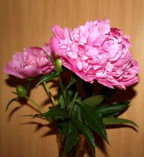 FOTKA - Ružová krása vo váze