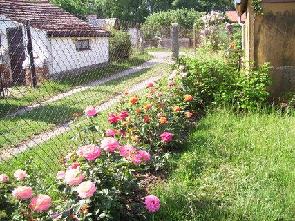 FOTKA - Část našich růží