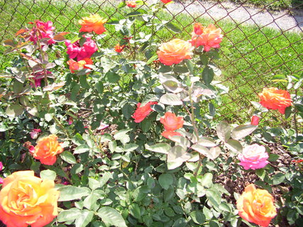 FOTKA - Hodně kvetou
