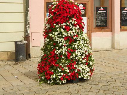 FOTKA - Květiny u orloje