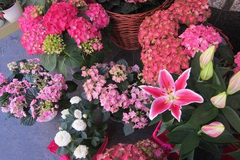 FOTKA - Jindřišskou ulicí - kolem obchodu s květinami