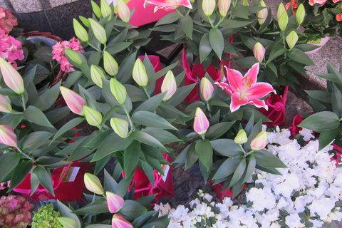 FOTKA - Jindřišskou ulicí - kolem květin mnoha barev