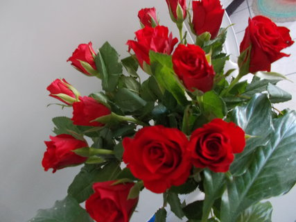 FOTKA - Rudá kytice...