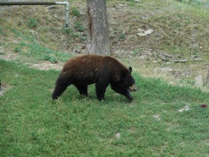 FOTKA - Medvěd v lesíku