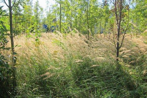 FOTKA - Podél cesty do lesoparku