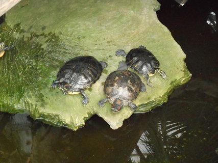 FOTKA - Želvičky na ostrůvku