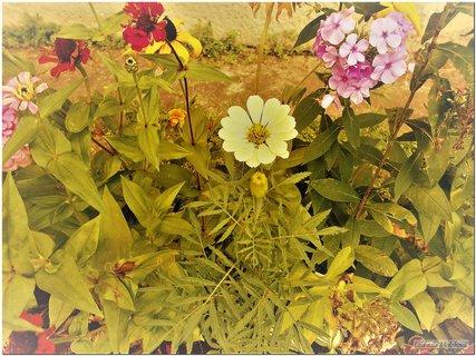 FOTKA - Kvety rôzne