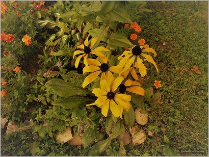 FOTKA - Kvety žlté