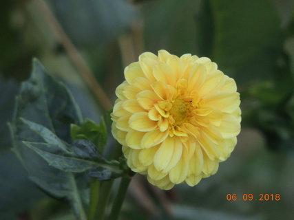 FOTKA - I žlutá ukazuje své květy