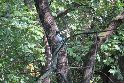 FOTKA - V parku Podviní - na stromě ...