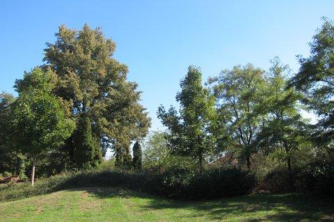 FOTKA - Park Srdce stále zelený