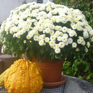 FOTKA - podzim.výzdoba