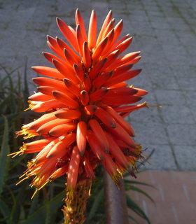 FOTKA - zvláštní květ