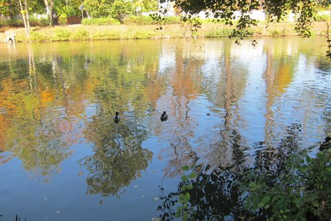 FOTKA - Podzim v parku v Čakovicích