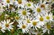 podzimní bílé