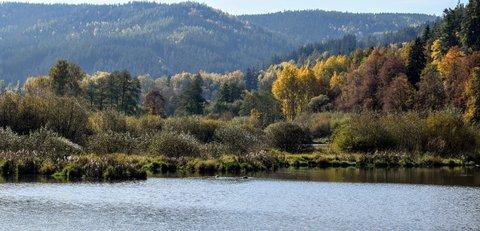 FOTKA - Zákoutí přehrady- Březová
