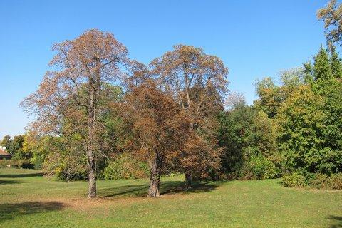 FOTKA - Park v Čakovicích - začíná podzim