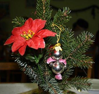 FOTKA - Vianočná ruža