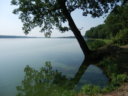 FOTKA - rybníky a jiná voda: rybník Rožmberk