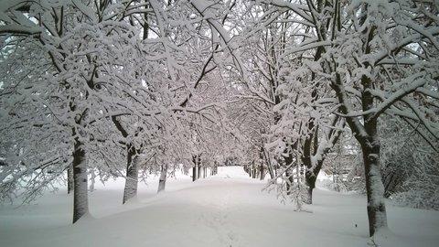FOTKA - zimní alej