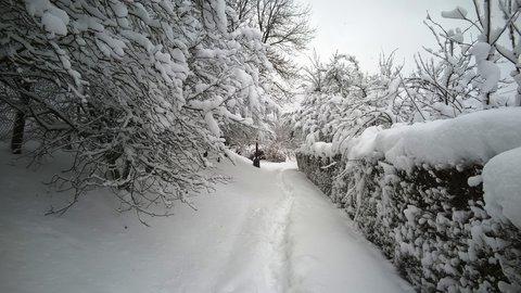 FOTKA - podél tůjového plotu