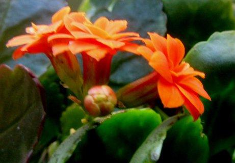 FOTKA - oranž. dceřina