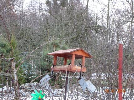 FOTKA - Čekání na ptáčky