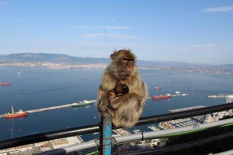 FOTKA - Panorama z Gibraltaru