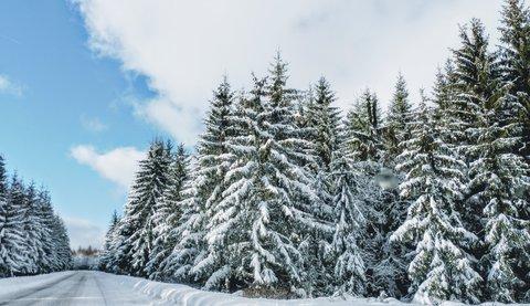 FOTKA - nádherné lesy u nás
