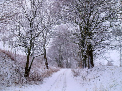 FOTKA - zasněžená cesta