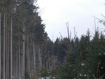 FOTKA - Špička Ještědu vykukuje za stromy (9.2.)