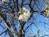 modré nebe,květ