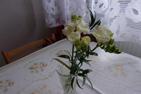 FOTKA - Frézie, ta zelená větvička stála víc než kytky
