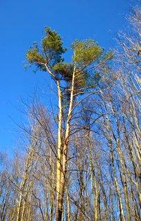 FOTKA - Strom v lesoparku